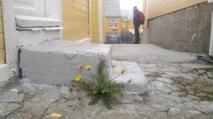 Grip. Foto Mari Kolbjørnsrud (9)